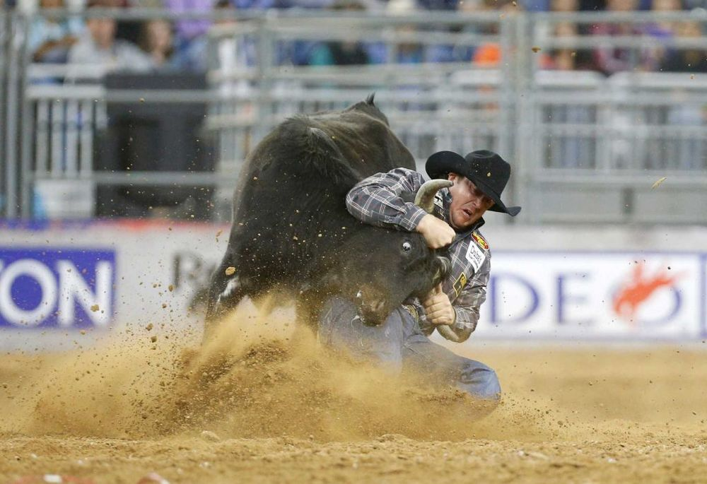 Nick Guy competes during the final of the steer wrestling competition on the last day of the Houston Livestock Show and Rodeo Sunday, March 20, 2016, in Houston. Guy was the day's champion during Super Shootout: North America's Champions Photo: Jon Shapley, Houston Chronicle
