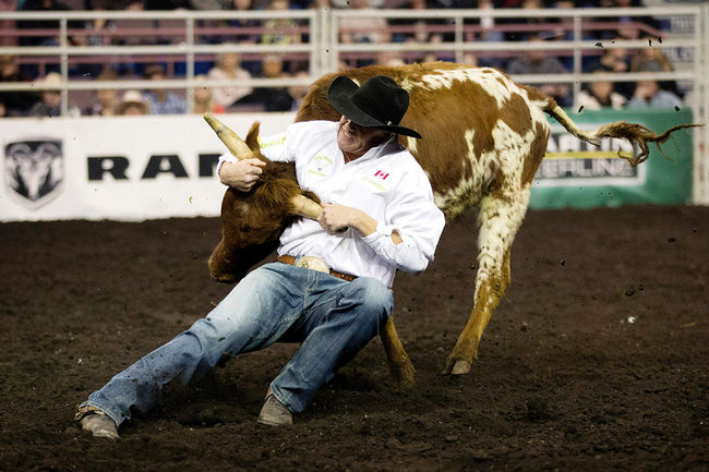 Cody Cassidy (Donalda, AB) takes part in the Steer Wrestling event during the final day of the Canadian Finals Rodeo at Rexall Place, in Edmonton, Alta. on Sunday Nov. 15, 2015. David Bloom/Edmonton Sun/Postmedia Network David Bloom/Edmonton Sun