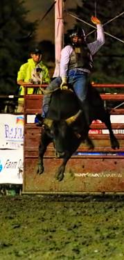 Oklahoma's Mickey Andrews made the only qualified ride to win the first round of bull riding at Mandan Rodeo DaysPhoto by Jackie Jensen