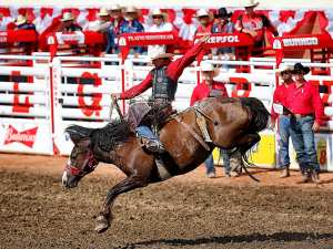 Zeke Thurston of Big Valley, Alta., wins the bareback title at the Calgary Stampede rodeo in Calgary, Alta. on Sunday July 12, 2015. Al Charest/Calgary Sun/Postmedia Network