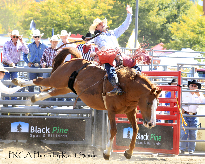 Bill Tutor from Huntsville, Texas, took the early lead in the bareback riding with an 87.5 after riding the Growney Brothers horse named Beaver Fever for eight-seconds. PRCA photo by Kent Soule
