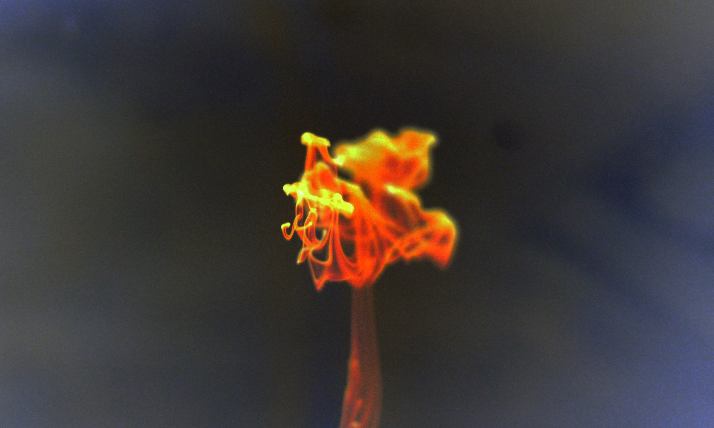 liquid-fire-explosion-lava-free-stock-photo-2