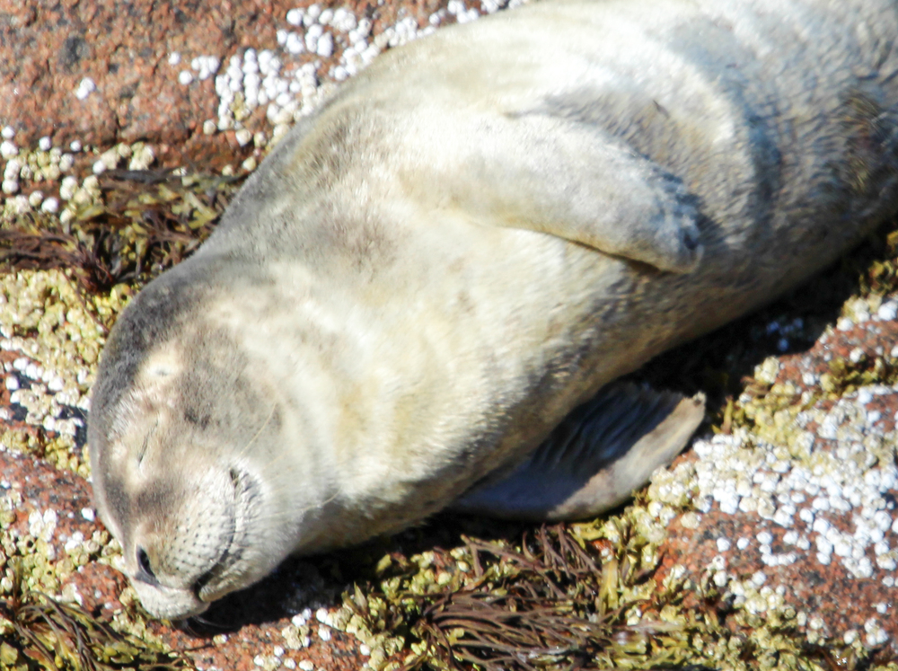 This cute fella taking a nap in the sun on the rocks below!