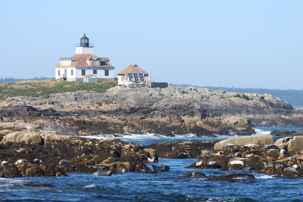 Egg Rock Lighthouse, with all sorts of sea birds and seals on the rocks around it.