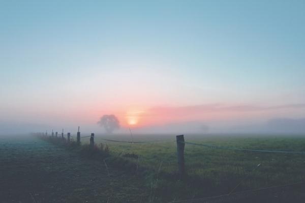 fog-dawn-landscape-morgenstimmung-163323.jpeg