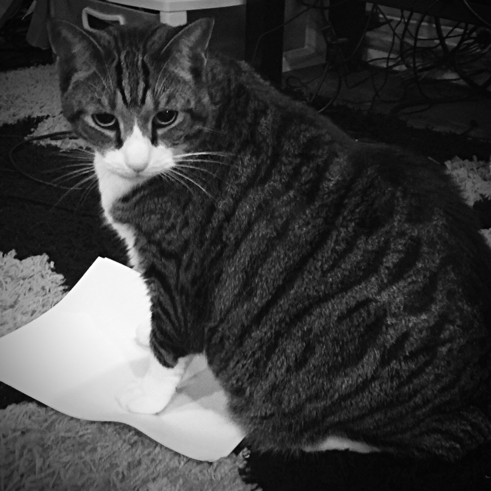 Want to attract a cat? Put down a piece of paper!