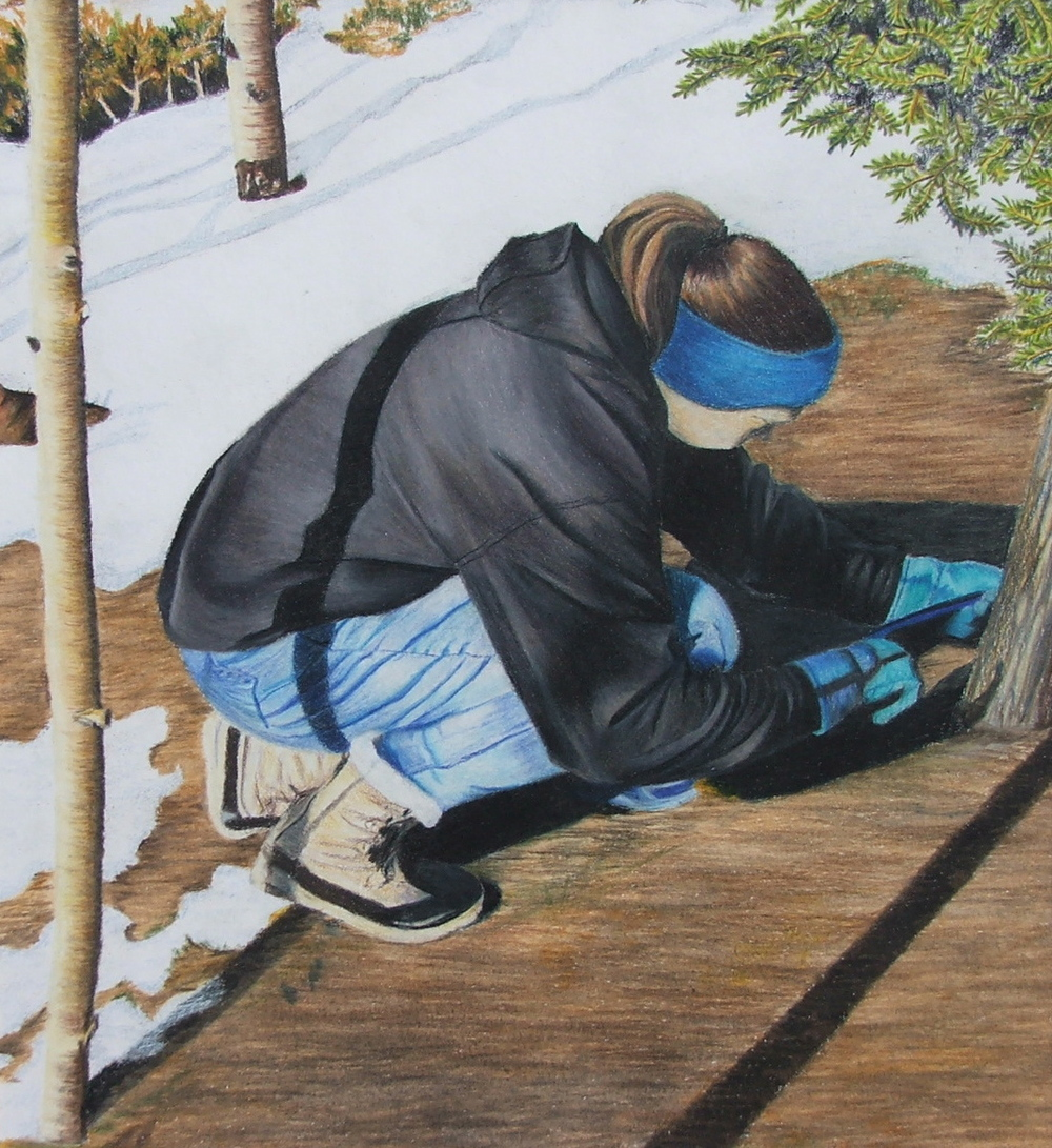 Tree Cutting , Prismacolor pencil, 2003 private collection