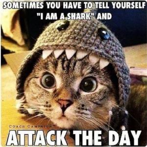 Cat Shark.jpg