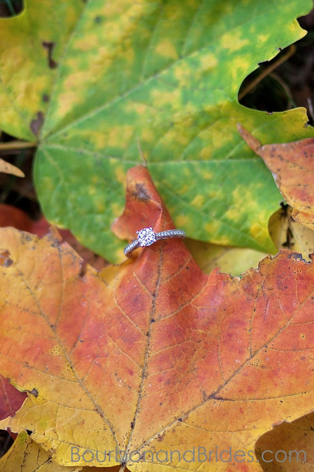 engagement ring fall leaves Engagement photos in Ashland | Kentucky engagement photographers | Kentucky Wedding Photogaphers | Bourbon & Brides Kentucky Wedding Photography