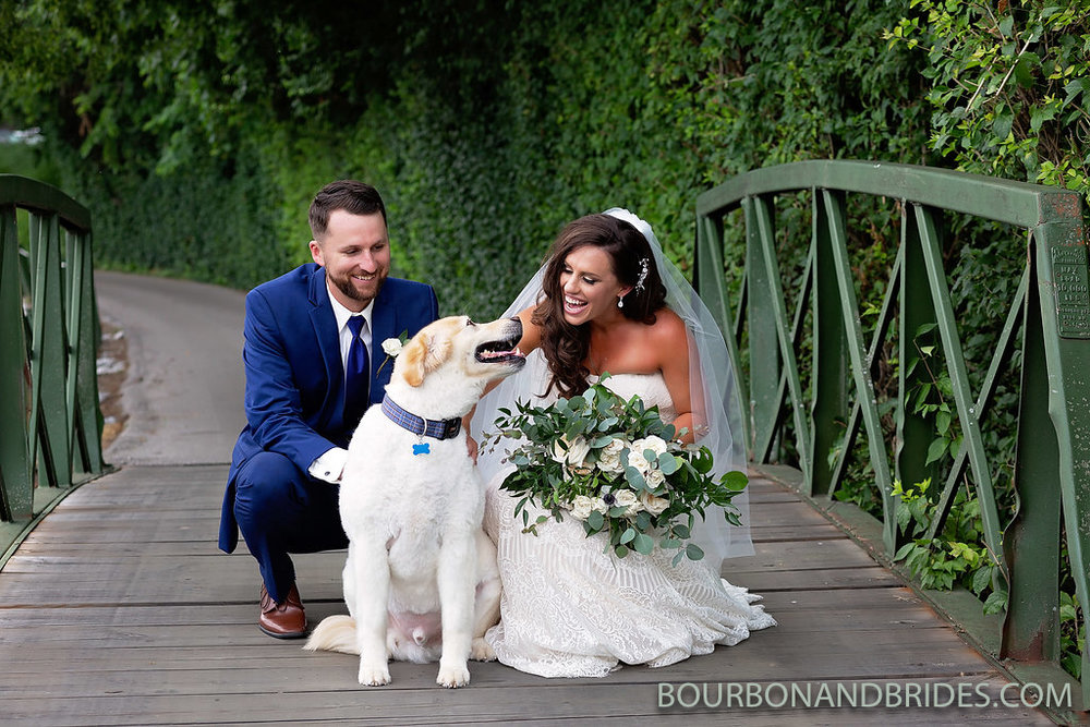 marriott-wedding-dog.jpg