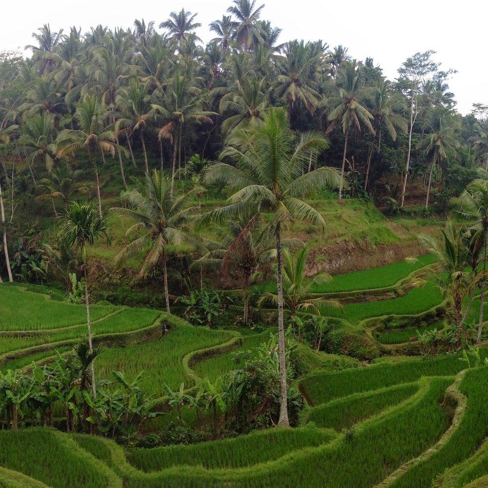 Tegalalang Rice Field, Ubud, Bali