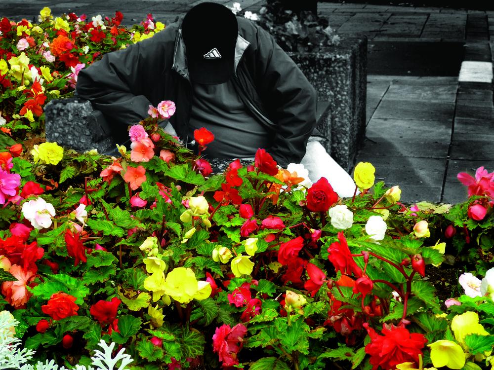 danielflowers.jpg