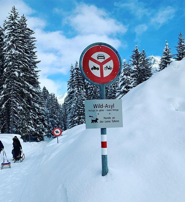 Ruobstei: Das Asyl für alle Nachteulen und Tagträumer, die es gerne wild mögen. 😘🎶☺️ # # # #wild #winter2019 #bar #party #schnee #snow #dj #music #feiern