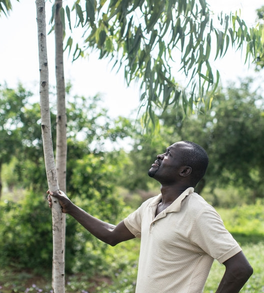 Otieno in his grove of trees  (photo credit: Nichole Sobecki for NPR)
