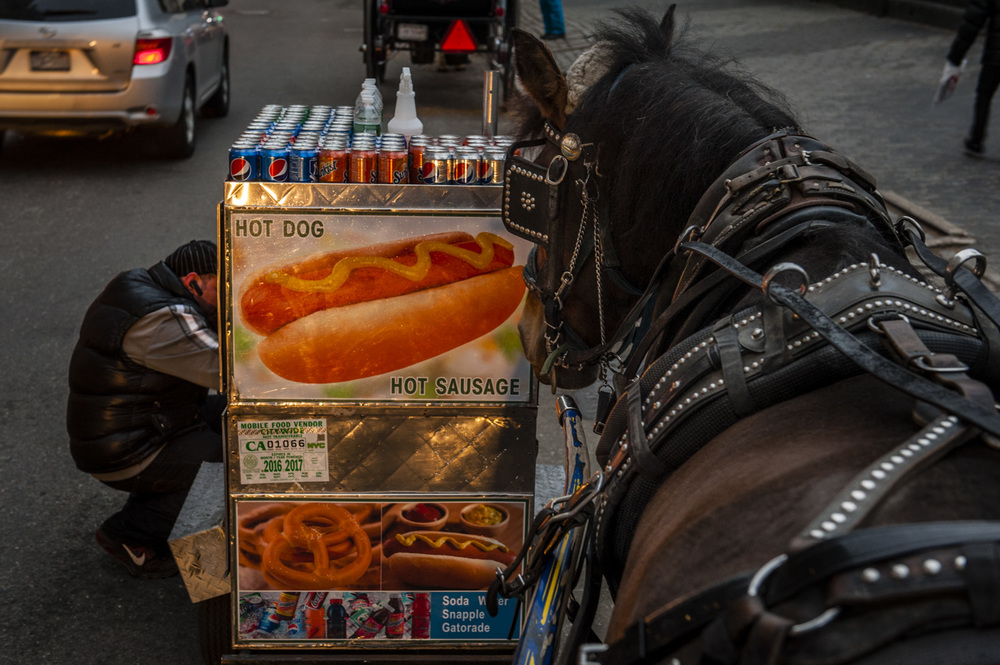 JAM_CARRIAGEHORSES-15.jpg