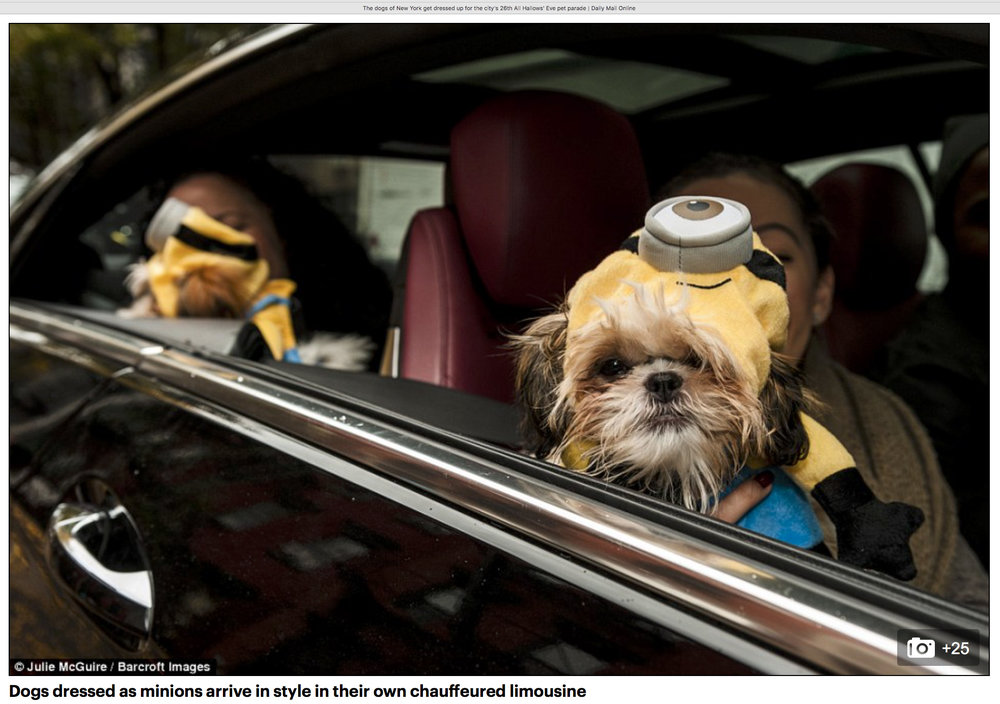 Minions arrive at the Halloween Dog Parade