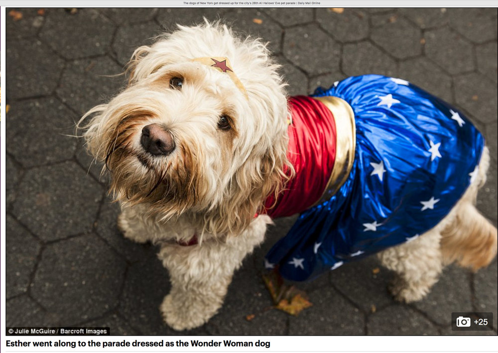Esther the Wonder Woman (Dog)