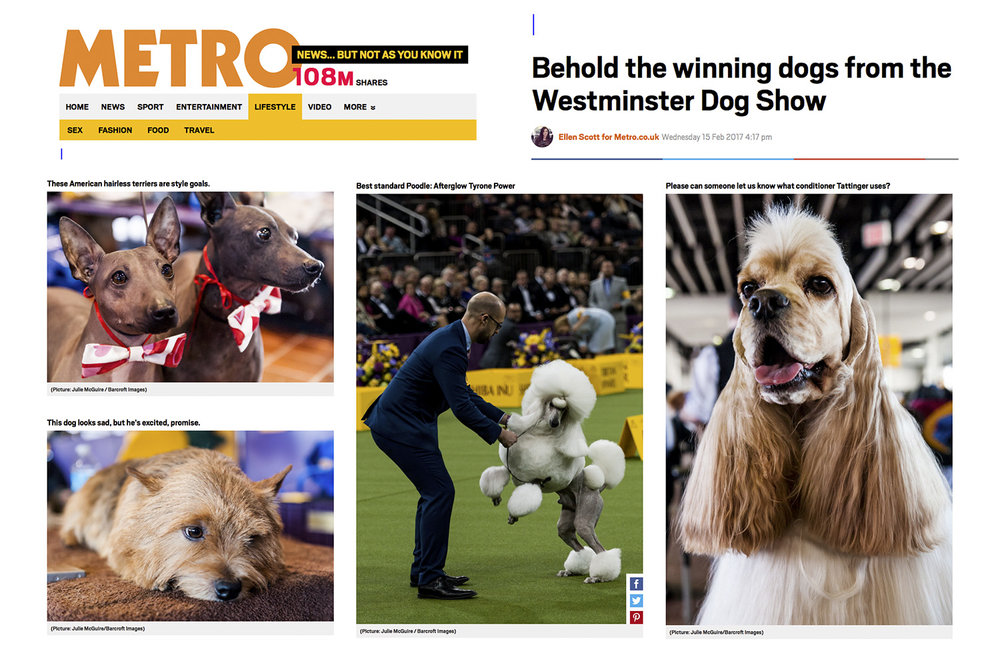 Westminster Dog Show 2017