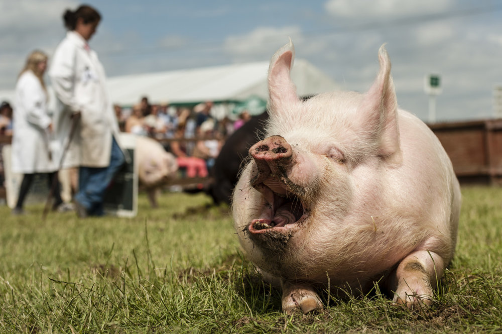Great Yorkshire Show 2015, England