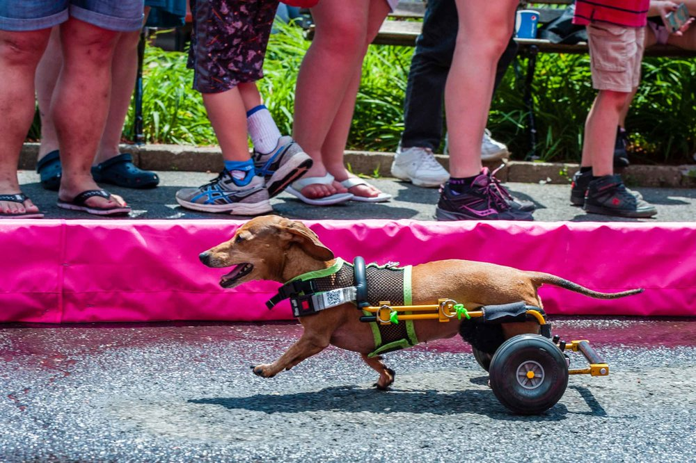 Wiener Dog 100 Races 2016, Connecticut