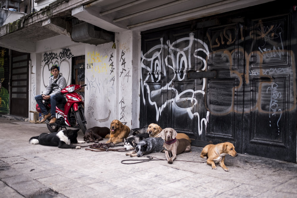 Dogs of Mexico City