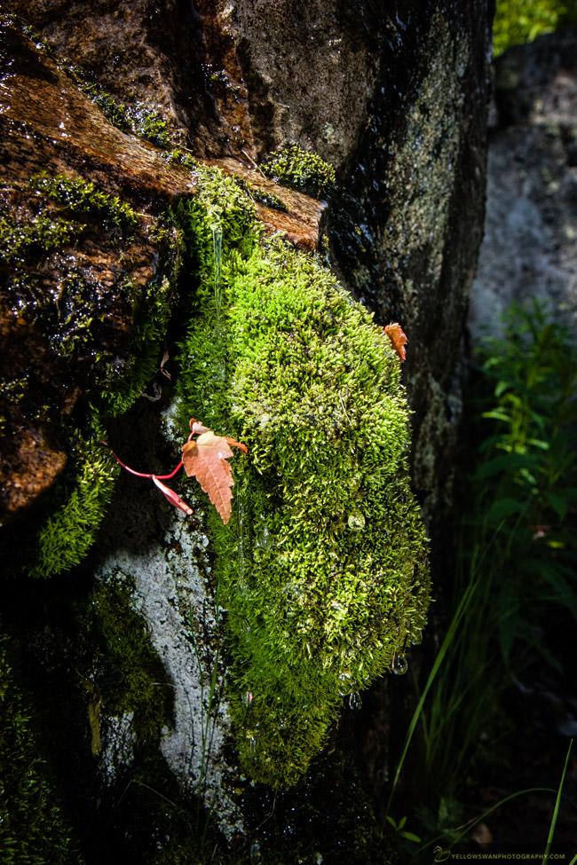 Voyageurs-Ellsworth-Moss.jpg