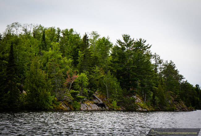 Voyageurs-Trees-on-an-island.jpg