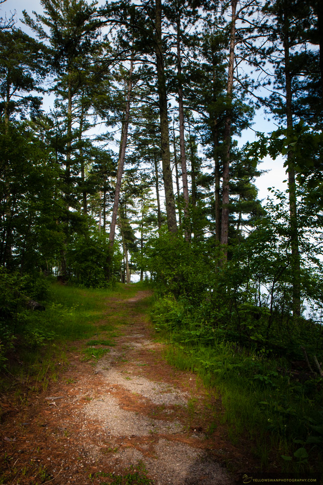 Voyageurs-hiking-through-the-pines.jpg