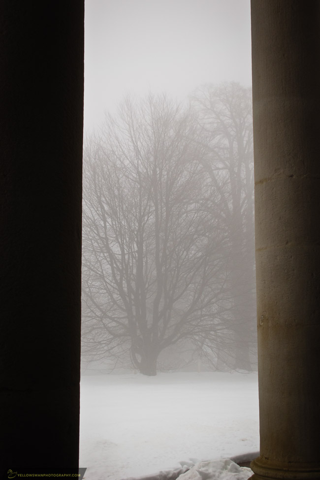 monticello-fog-tree.jpg
