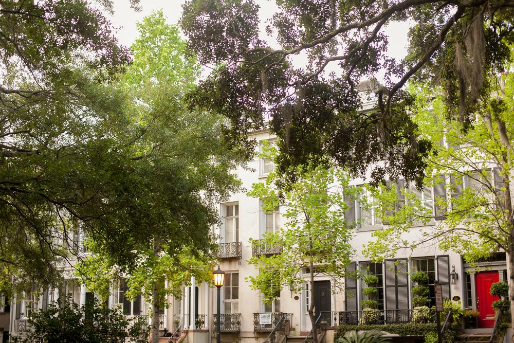 Savannah-26.jpg