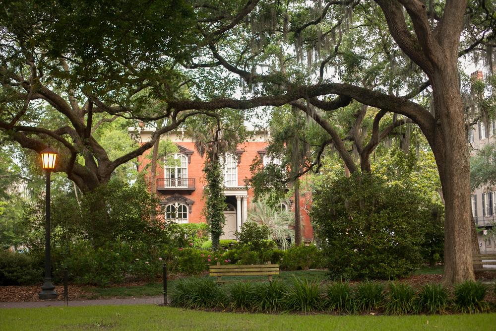 Savannah-27.jpg