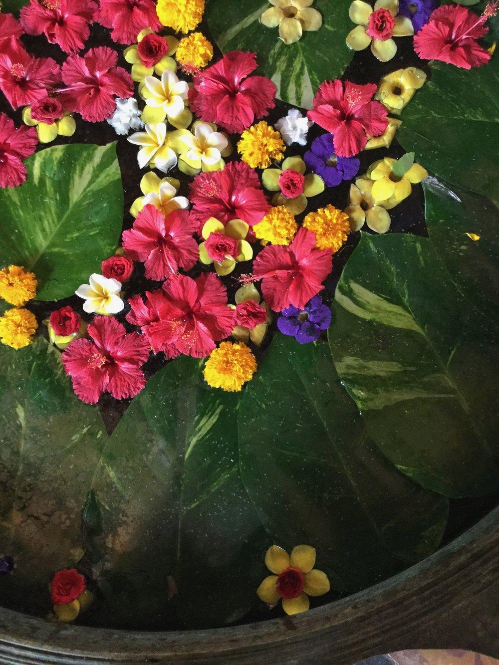 flowers, kerala