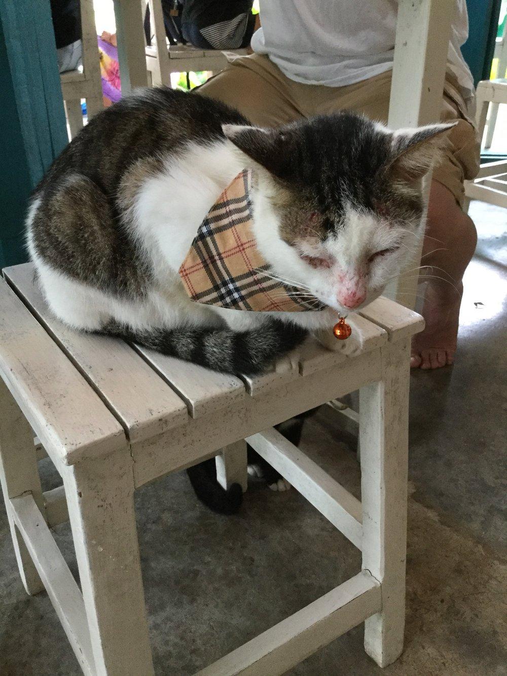 koh lanta cats