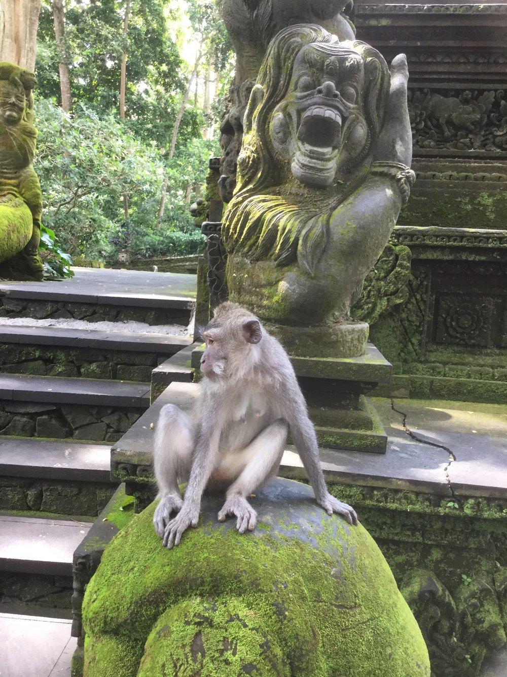 monkey temple, ubud