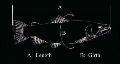 field fish