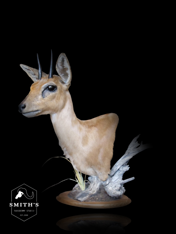 African-Taxidermy033 copy.jpg