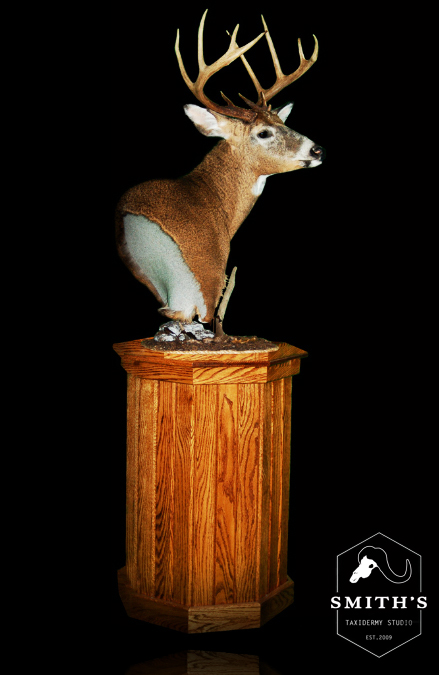 Deer-Taxidermy-005 copy.jpg