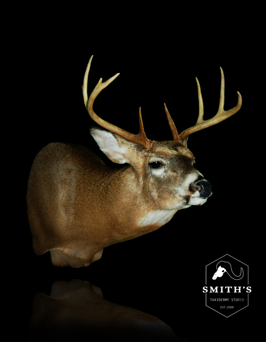 Deer-Taxidermy-008 copy.jpg