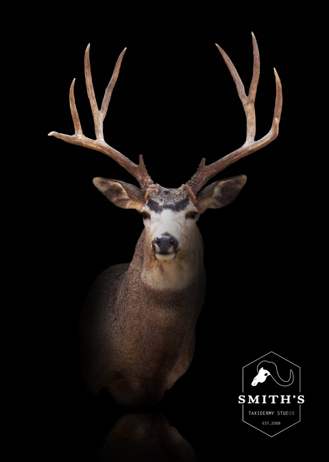 Deer-Taxidermy-002 copy.jpg
