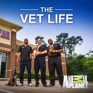 The Vet Life.jpg