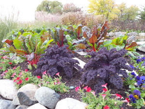 Fall tolerant annuals like petunia, pansy, ornamental kale and even Swiss chard make their own fall display.