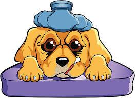 Sick Dog.jpg