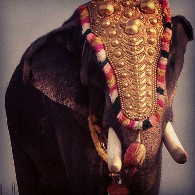 Ganesh in the flesh.