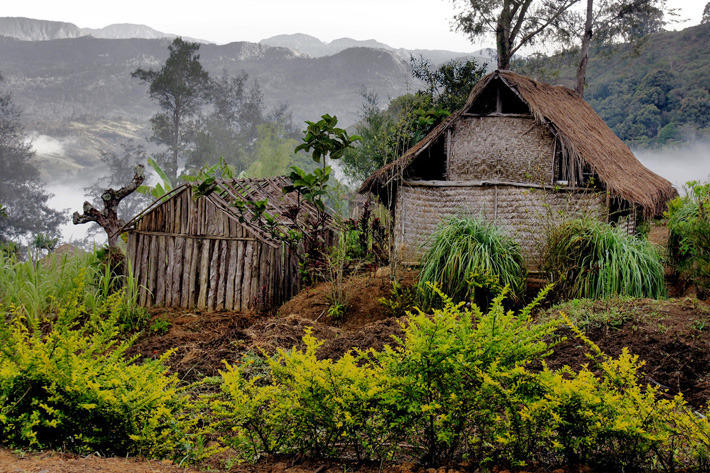 Highland houses of the hill tribes in Papua New Guinea