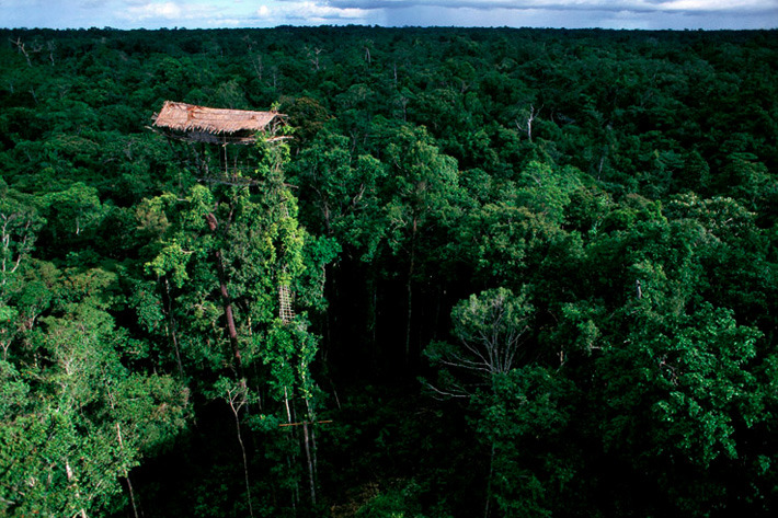 Korowai tree houses in West Papua, Indonesia
