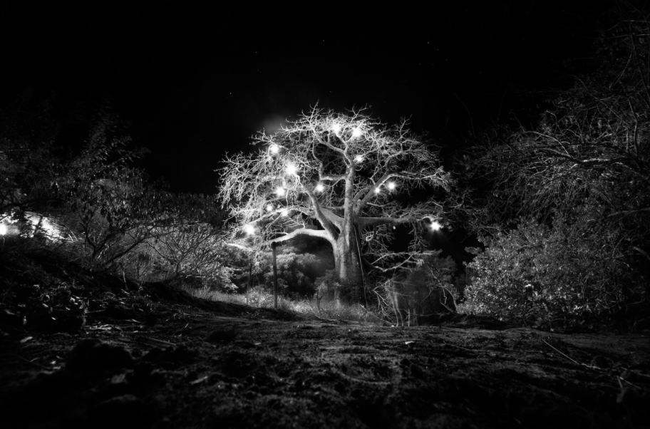 Baobab tree lit up at night