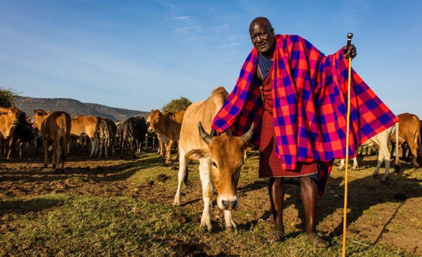 Kelian Ole Mbirikani, a member of the Olderkesi Land Committee and Chairman of the Olentoroto land owners group, with his cattle.