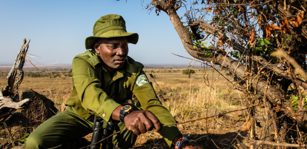 The AKTF team spend much of their time searching for and removing snares from inside the Masai Mara National Reserve. Although the snares are set primarily to catch herbivores they are indiscriminate killers, also trapping lions, leopards, and other predators.