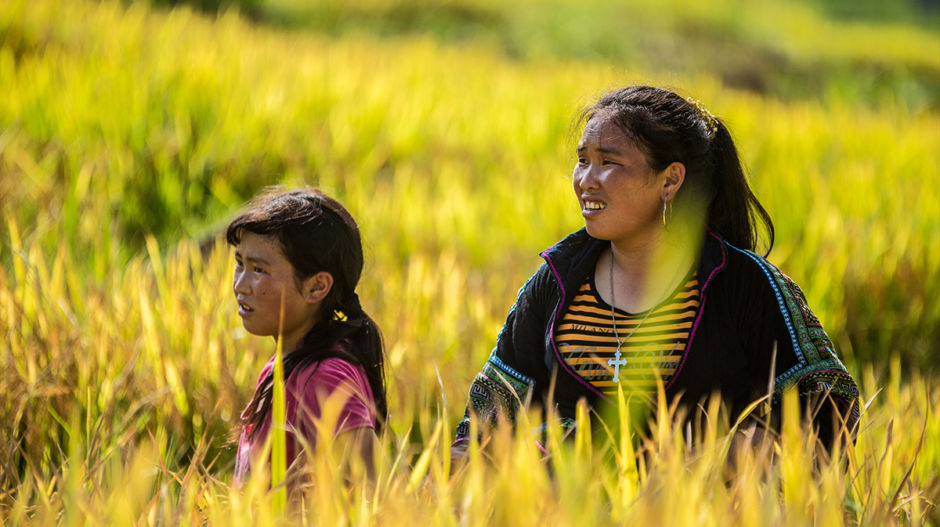 Unlike many parts of Vietnam, the Sapa region only has one rice harvest per year. Tourists visiting between late August to mid-September will witness the rice paddies turning gold. Vang Thi Pi and her daughter (pictured above) begin the year's harvest outside their homestay.