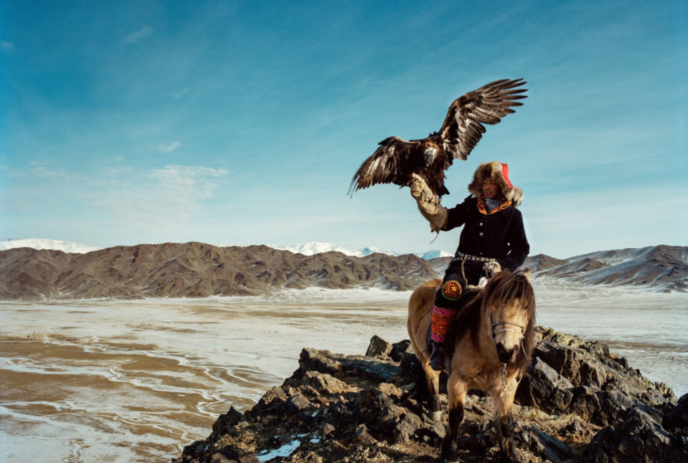 In good years, Kuantkhan Ologban and his eagle catch around 30 animals. Some years, none are caught at all due to extreme weather.